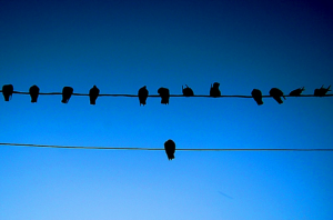 birdonwire[1]